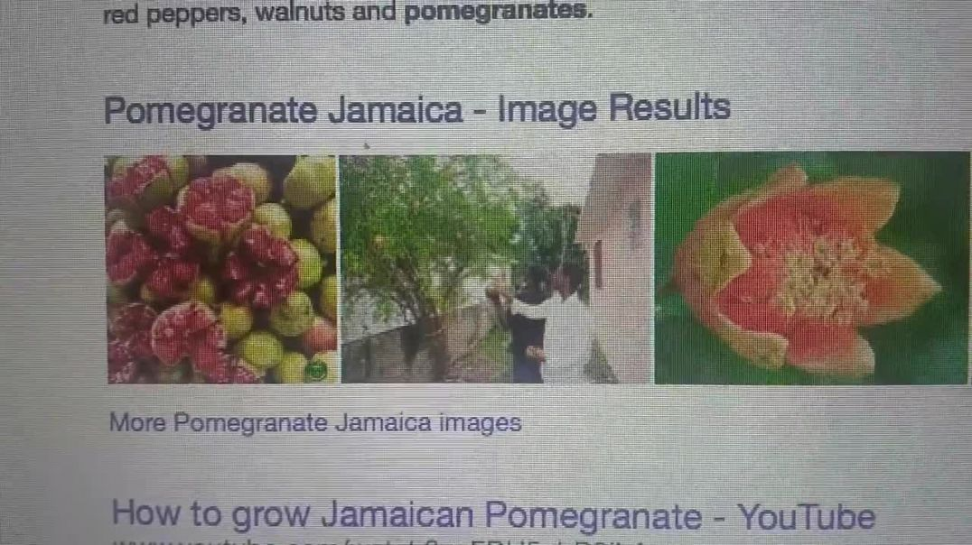 Ship designed by Yah took 1 Israelite Negroe tribe to Americas 592-591 BC Pomegranate corn conie con
